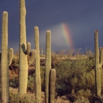 Theater Presentation Upgraded at Saguaro National Park